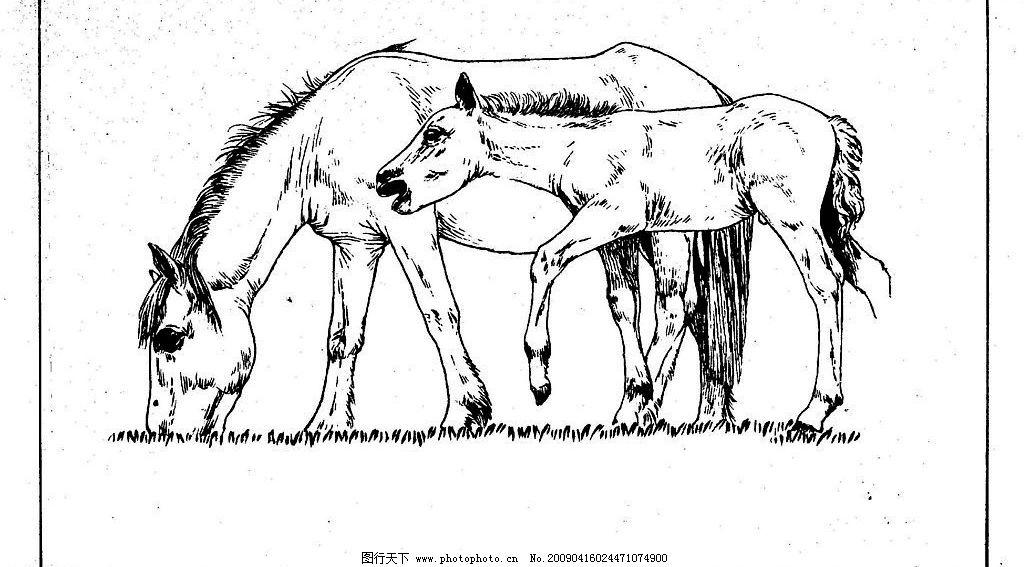 百马图69 百马谱 马 白马 百马 白描 线描 黑白稿 手绘 绘画 动物
