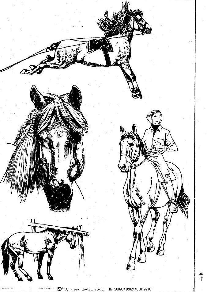 百马图50 百马谱 马 白马 百马 白描 线描 黑白稿 手绘 绘画 动物