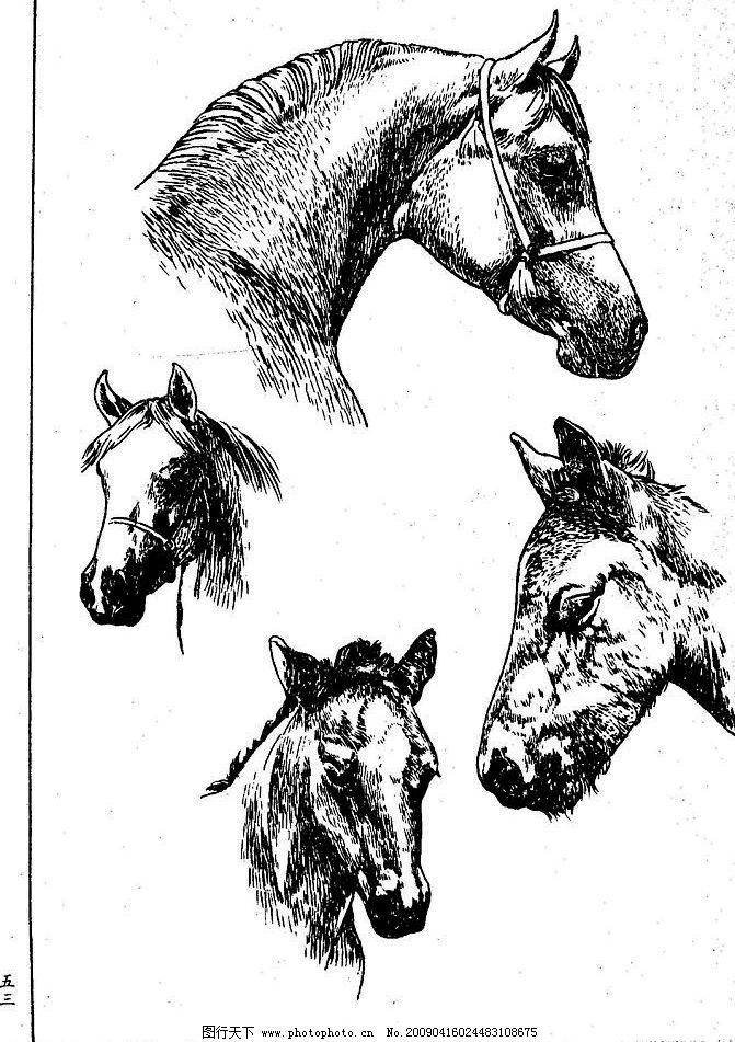 百马图53 百马谱 马 白马 百马 白描 线描 黑白稿 手绘 绘画 动物