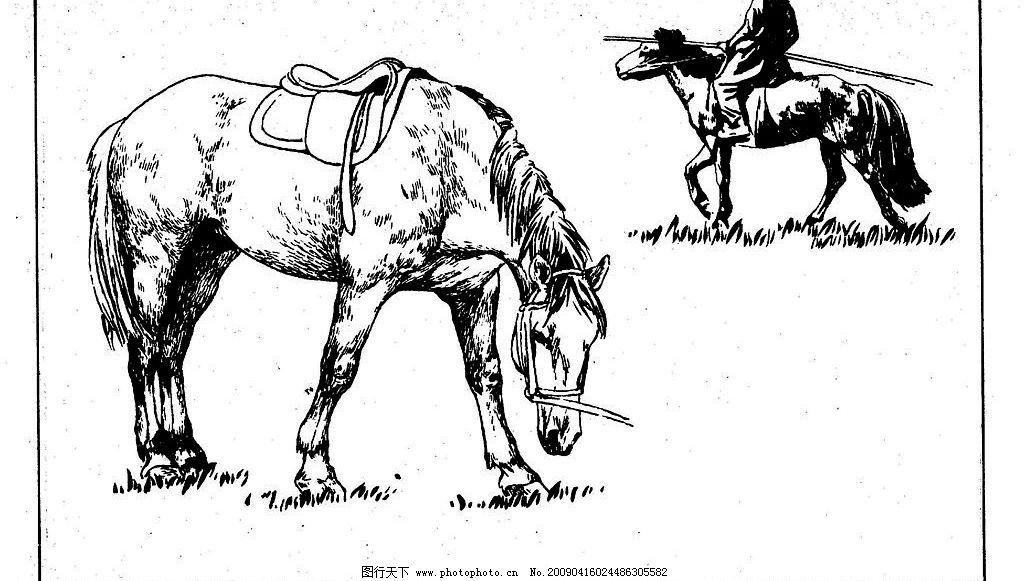 百马图65 百马谱 马 白马 百马 白描 线描 黑白稿 手绘 绘画 动物