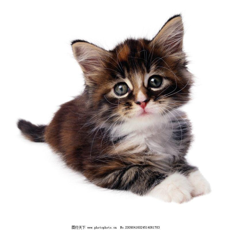 可爱之猫0200,动物-图行天下图库