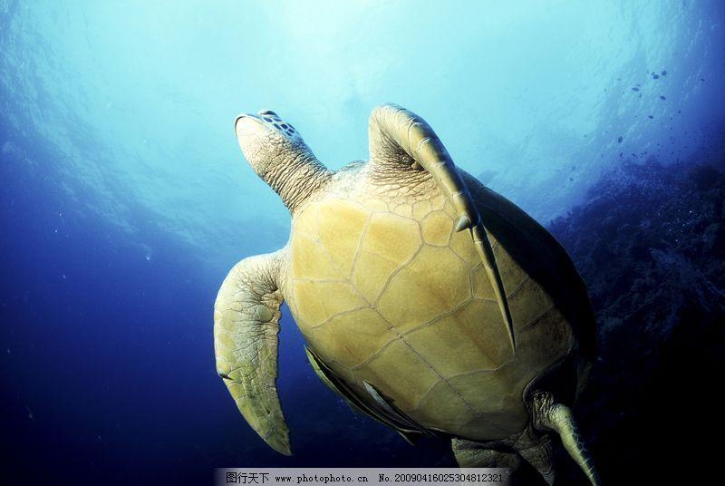 深海动物0014