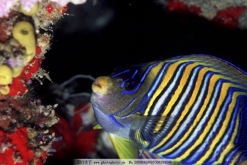 动物 深海动物
