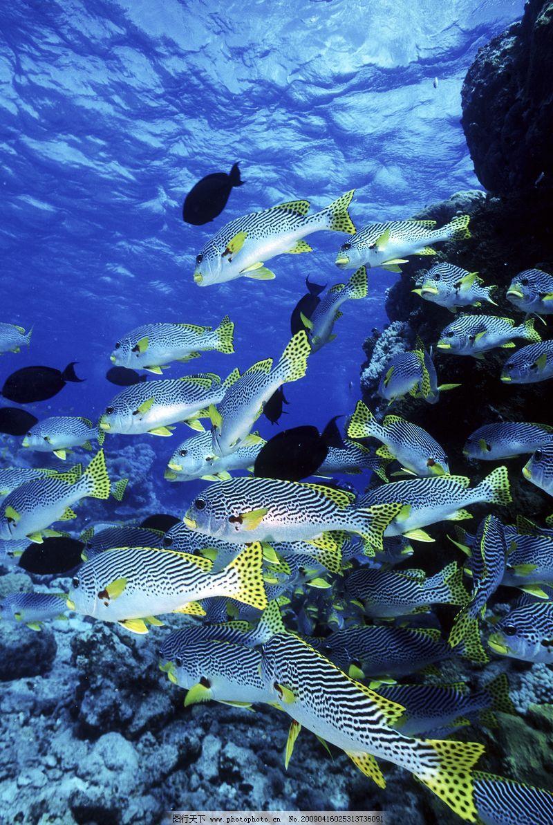 深海动物0031_海洋生物