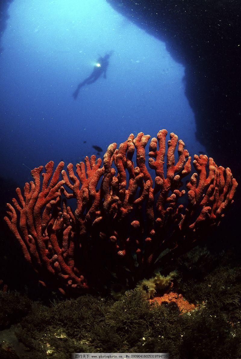 深海动物0002_海洋生物