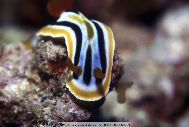 深海动物0090_海洋生物