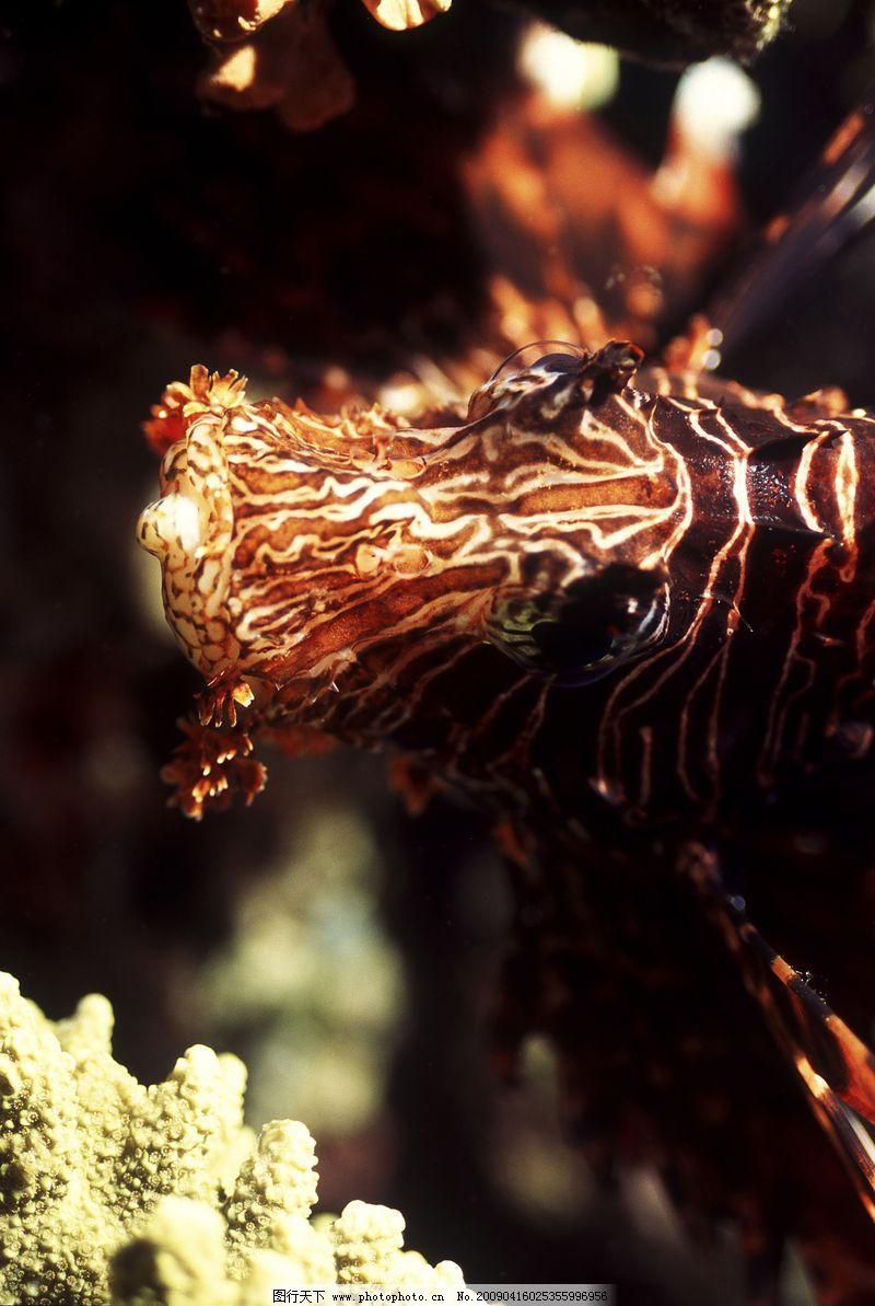 深海动物0071