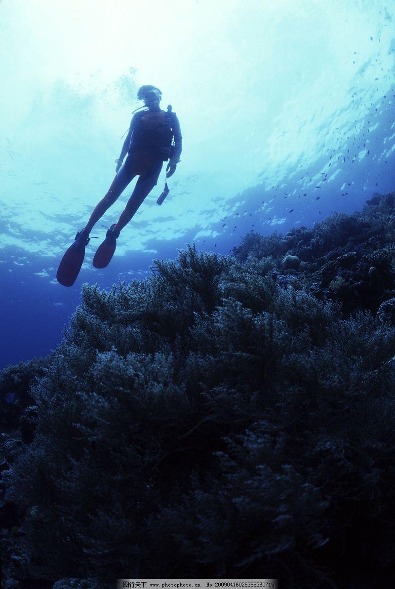 深海动物0011