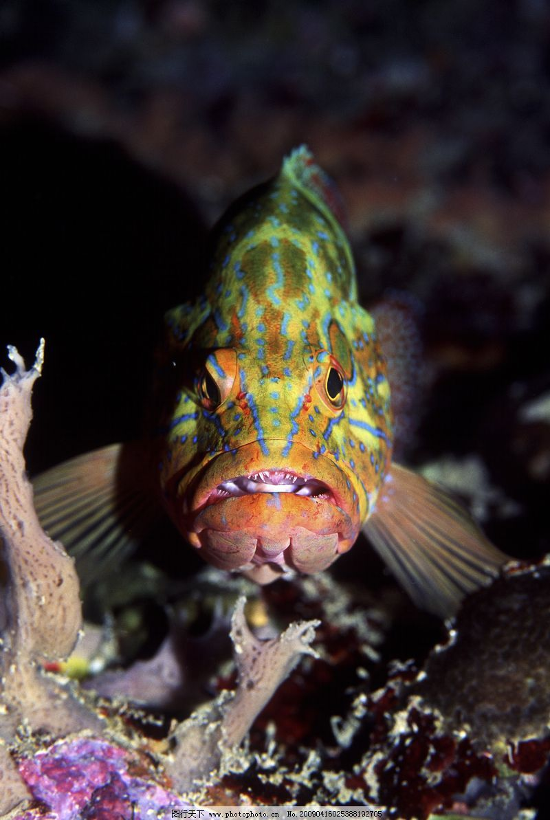 深海动物0098