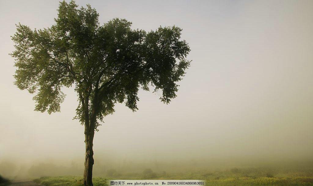 风景 小树 雾天 天空 草坪 草地 小路 山坡 秋天 自然景观 自然风景