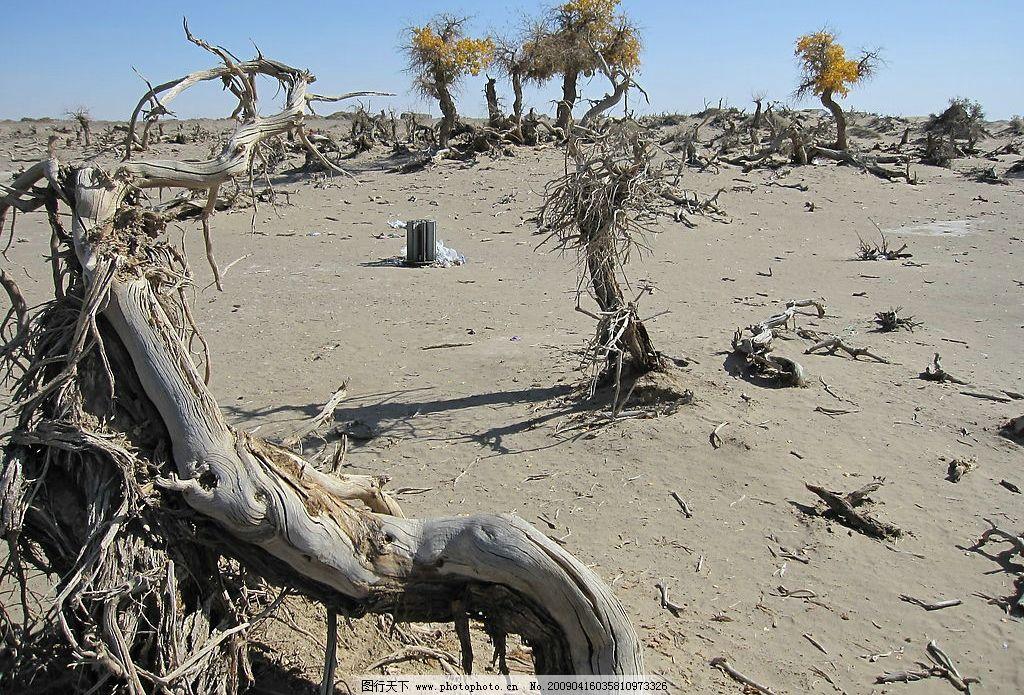 戈壁 胡杨 沙漠 胡杨树 胡杨林 枯树 死树 造型树 干涸 摄影图库