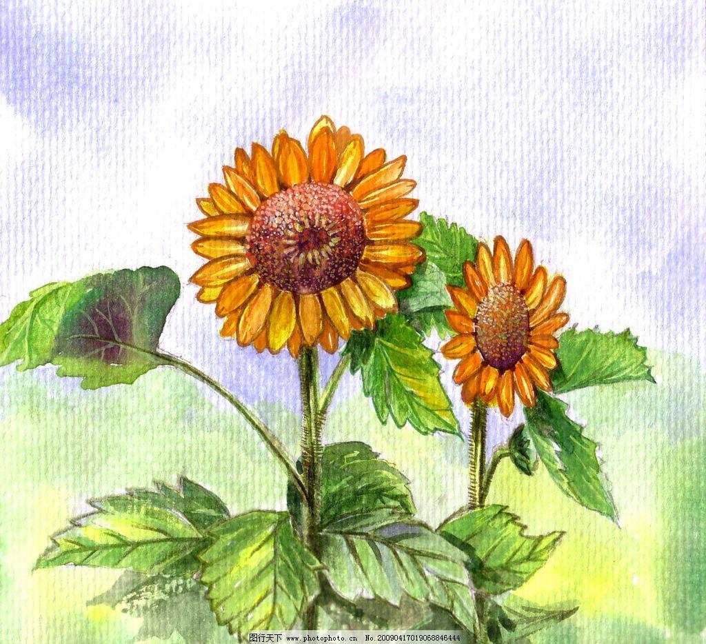 向日葵 手绘 文化艺术 绘画书法