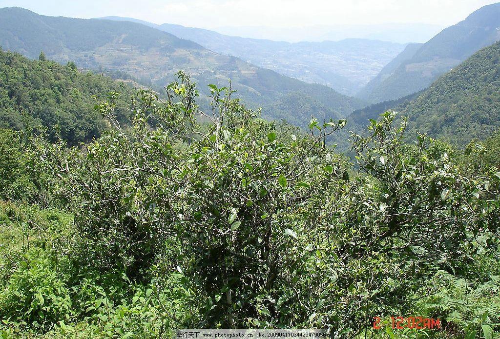 茶山 幽静 大山 远景 自然景观 山水风景 摄影图库 72dpi jpg