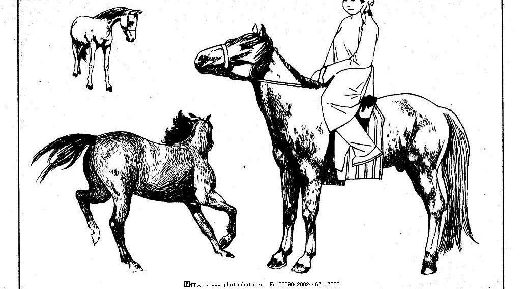 百马图73 百马谱 马 白马 百马 白描 线描 黑白稿 手绘 绘画 动物