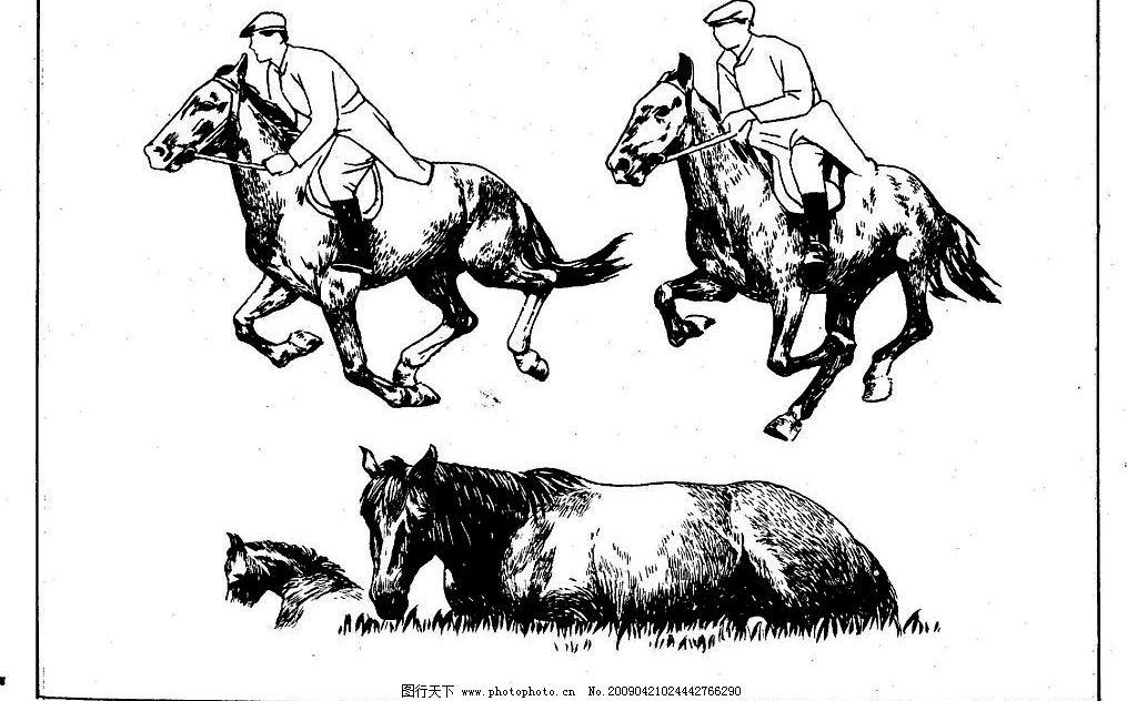 百马图77 百马谱 马 白马 百马 白描 线描 黑白稿 手绘 绘画 动物