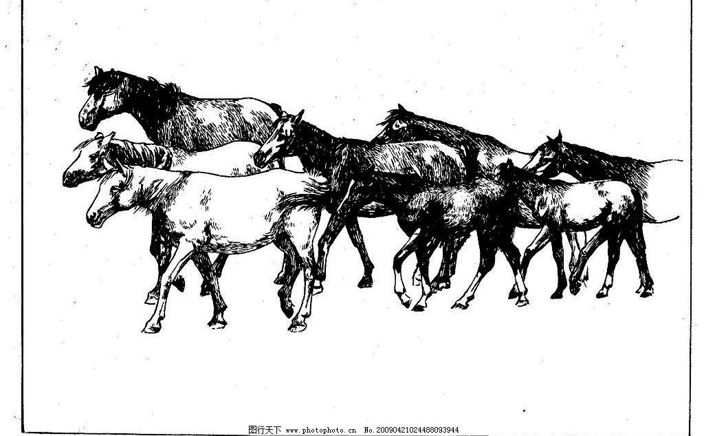 百马图79 百马谱 白马 白描 线描 黑白稿 手绘 绘画 动物