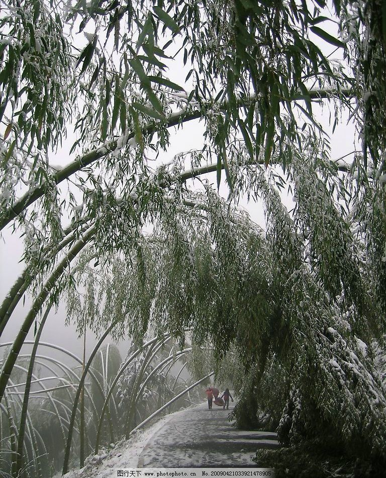 星星竹海9 咸宁星星竹海旅游景点 竹林 雪景 竹林雪景 国内旅游