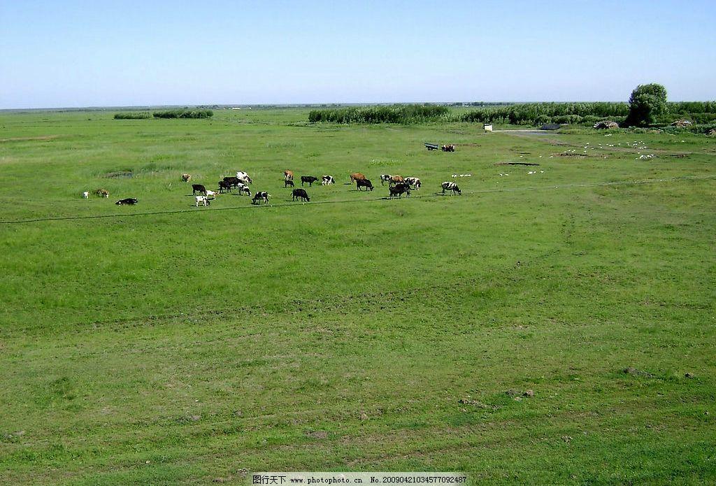 草原 大自然 景观 景象 天空 植物 动物 自然景观 田园风光 摄影图库