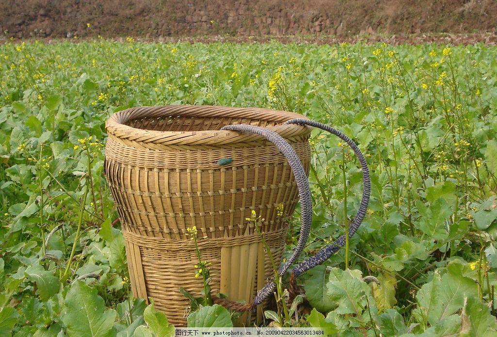 小背篓 背篓 油菜花 菜地 自然景观 田园风光 摄影图库 72dpi jpg