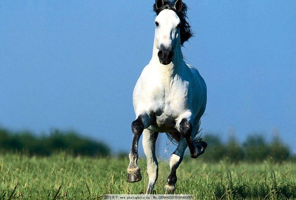骏马 奔跑 生物世界 野生动物 摄影图库 200dpi jpg