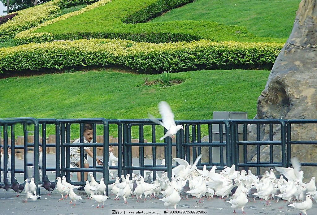 鸽子 大连 森林动物园 动物散养区 草地 小孩 生物世界 野生动物