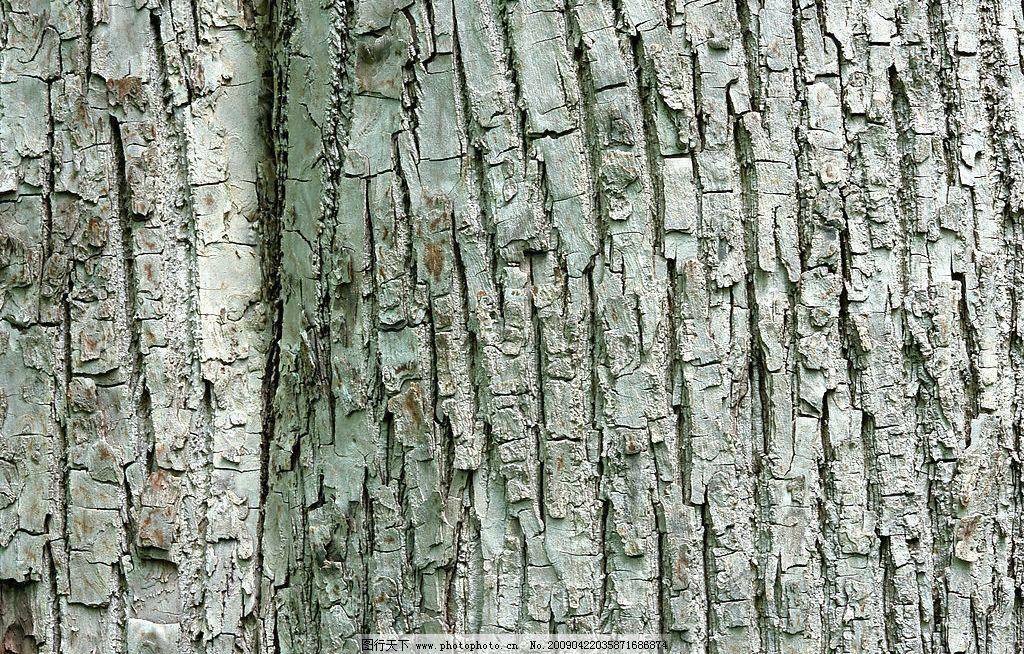 树皮纹理 纹理 树皮纹路