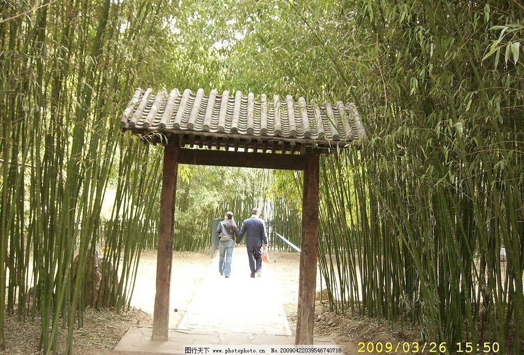 中山公园 竹林 建筑园林 园林建筑 摄影图库 96dpi jpg