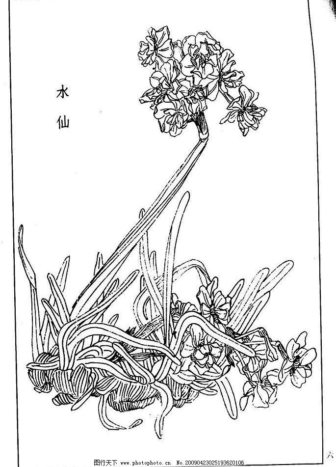 page(1006) 水仙 百花 草 白描 线描 黑白稿 绘画