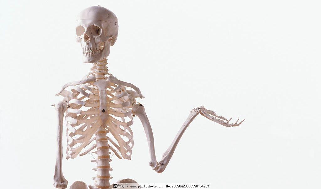 人体骨架 骷髅 白色骷髅 骨架 其他 图片素材 设计图库 300dpi jpg