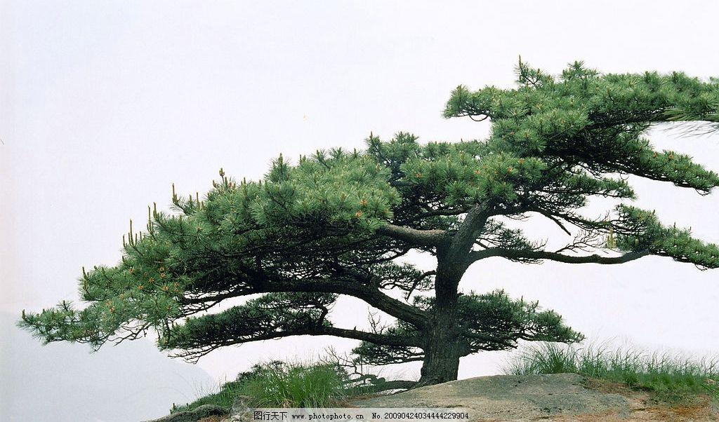 迎客松 自然 自然景观 山水风景 摄影图库 300dpi jpg
