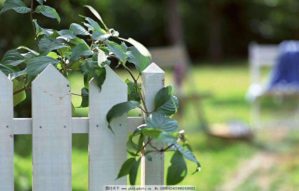 篱笆 木栅栏 自然 藤蔓 绿叶 田园 自然景观 其他 摄影图库