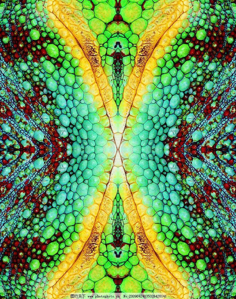 动物纹理图片,鳞片 网格 野性 皮草 斑驳 摄影图库-图