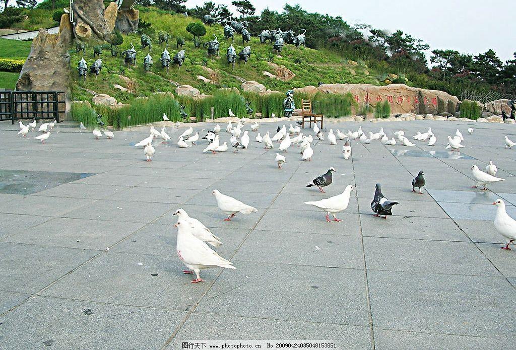 鸽子 大连 森林动物园