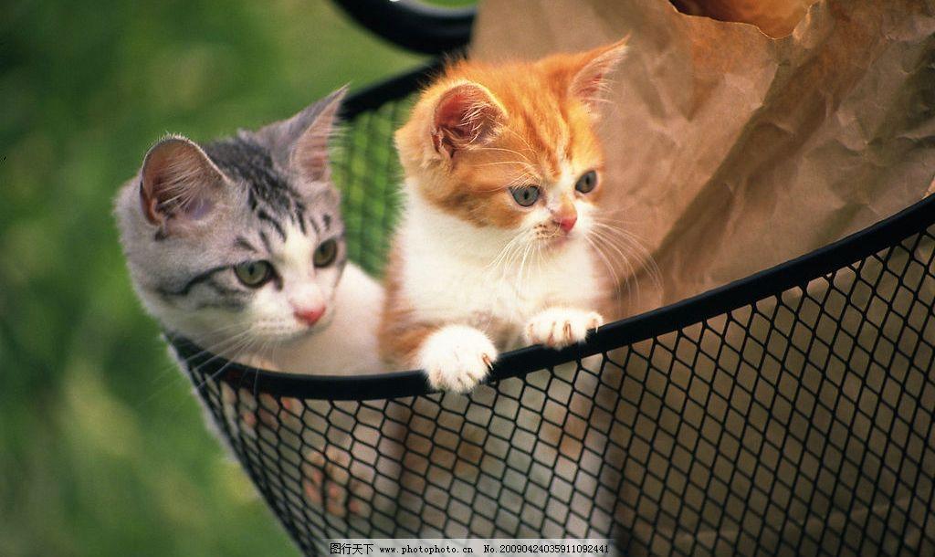 可爱的小猫咪图片