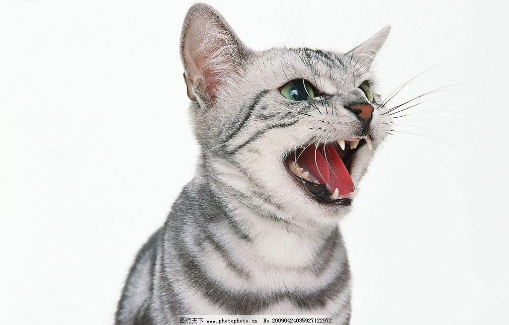 动物张嘴绘画图片
