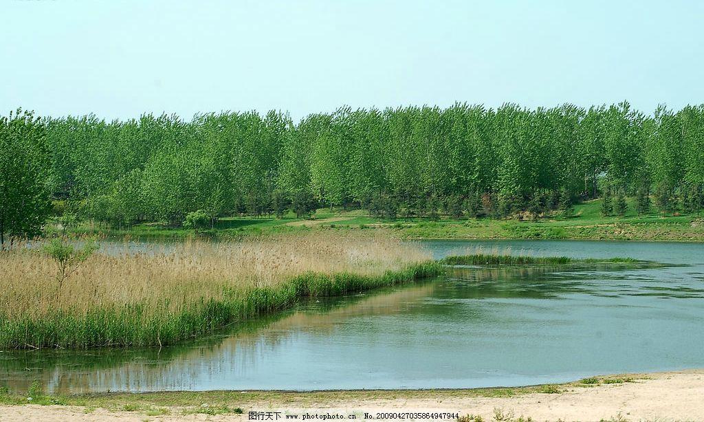古栗林 小河流水 树林 芦苇荡 沙滩 春天 摄影图库