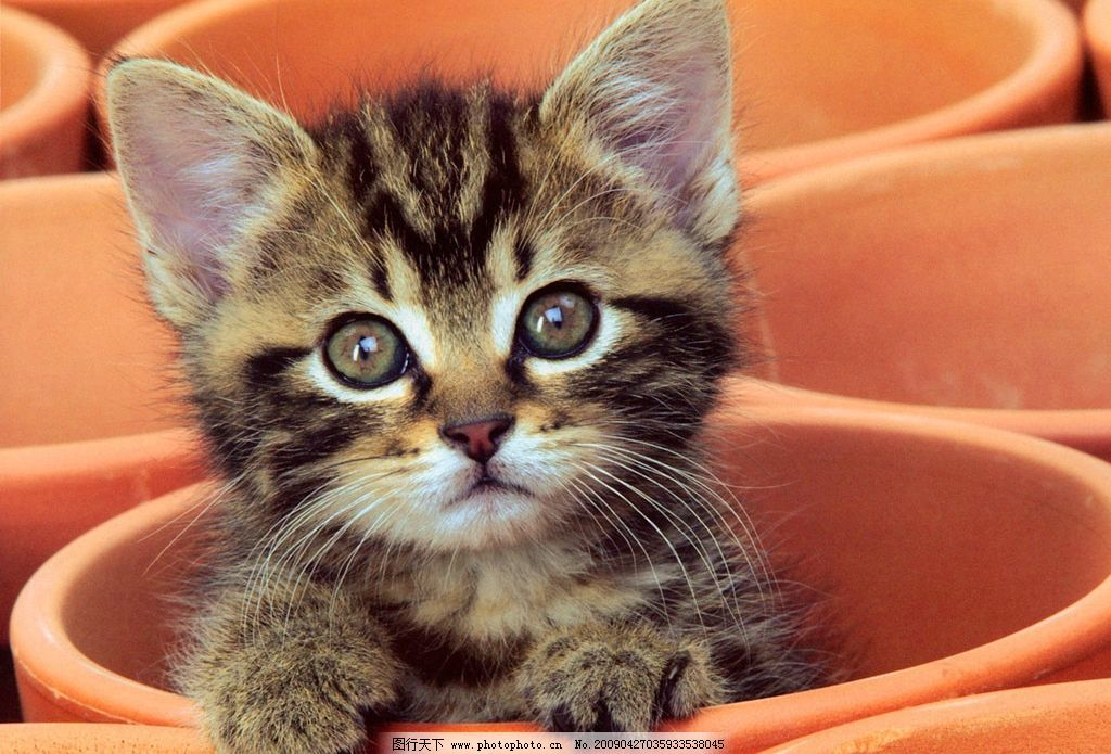 小猫 可爱 杯中 小花猫