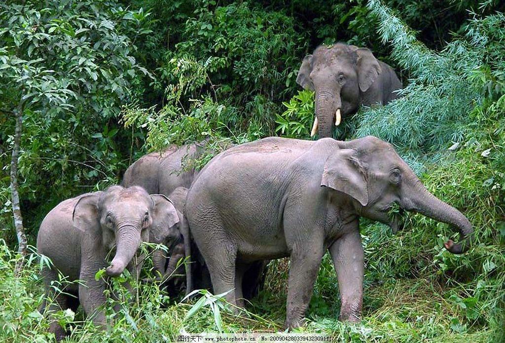 大象 风景 大象等 国内旅游 摄影图库