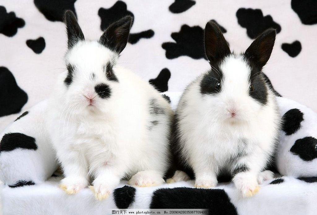 斑点兔 可爱的兔子 生物世界 野生动物 摄影图库 72dpi jpg