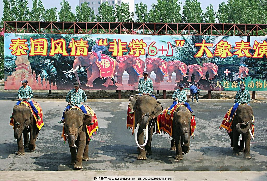 大象表演 大连 森林动物园 横排走 摄影图库 大连风景