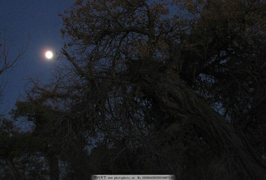 胡杨 内蒙古 额济纳 旅游摄影 生物世界 树木树叶 胡杨林胡杨树 摄影