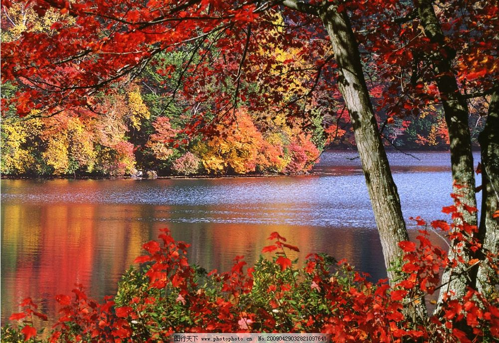 山间红枫 枫树 枫叶 红叶 山林 河水 尽染 秋色 秀美 源文件库