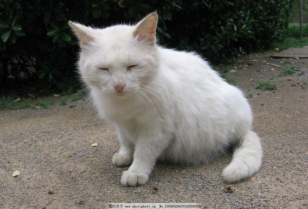小白猫图片_生活素材_生活百科