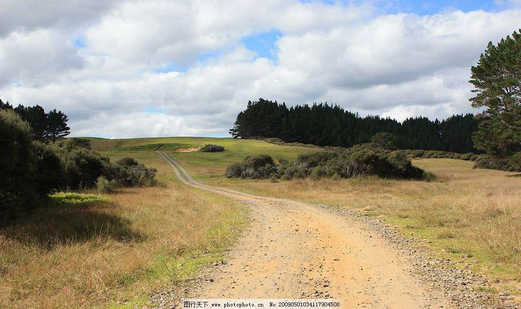 山路 路 土路 树 旅游 宁静 草原 国外旅游 新西兰 蓝天 白云 旅游