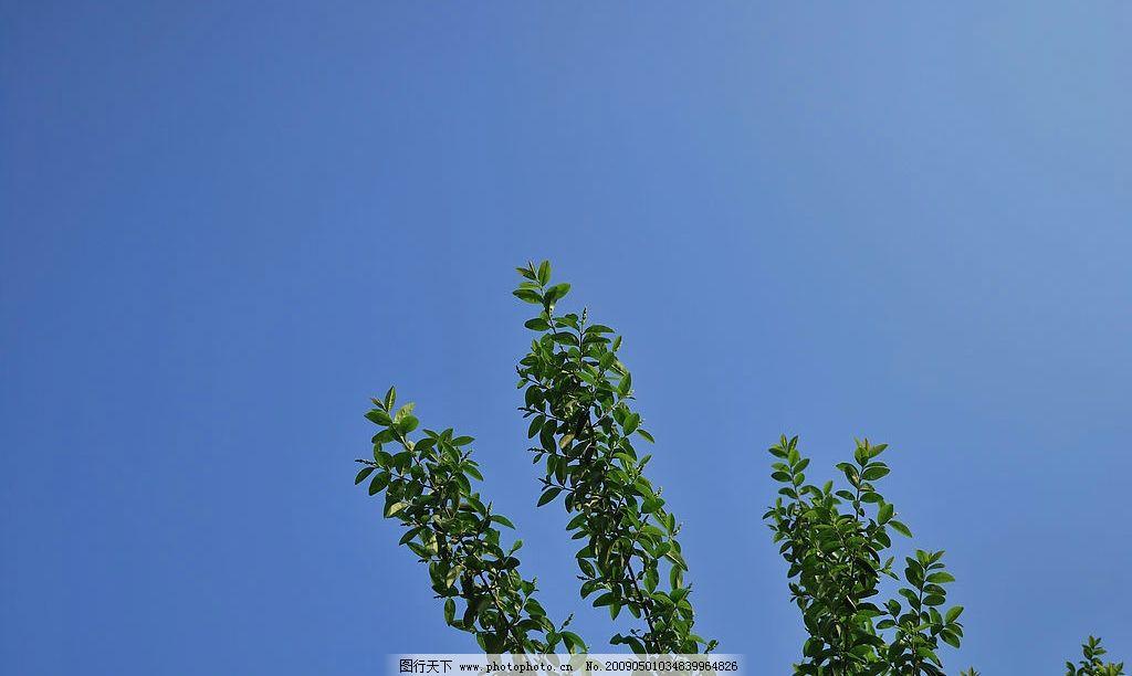 我心向上 树枝 天空 蓝天 自然景观 自然风景 摄影图库