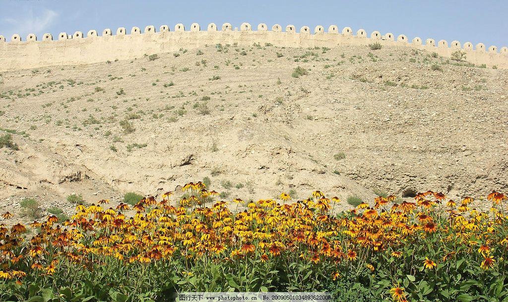 壁纸 成片种植 风景 花 植物 种植基地 桌面 1024_610