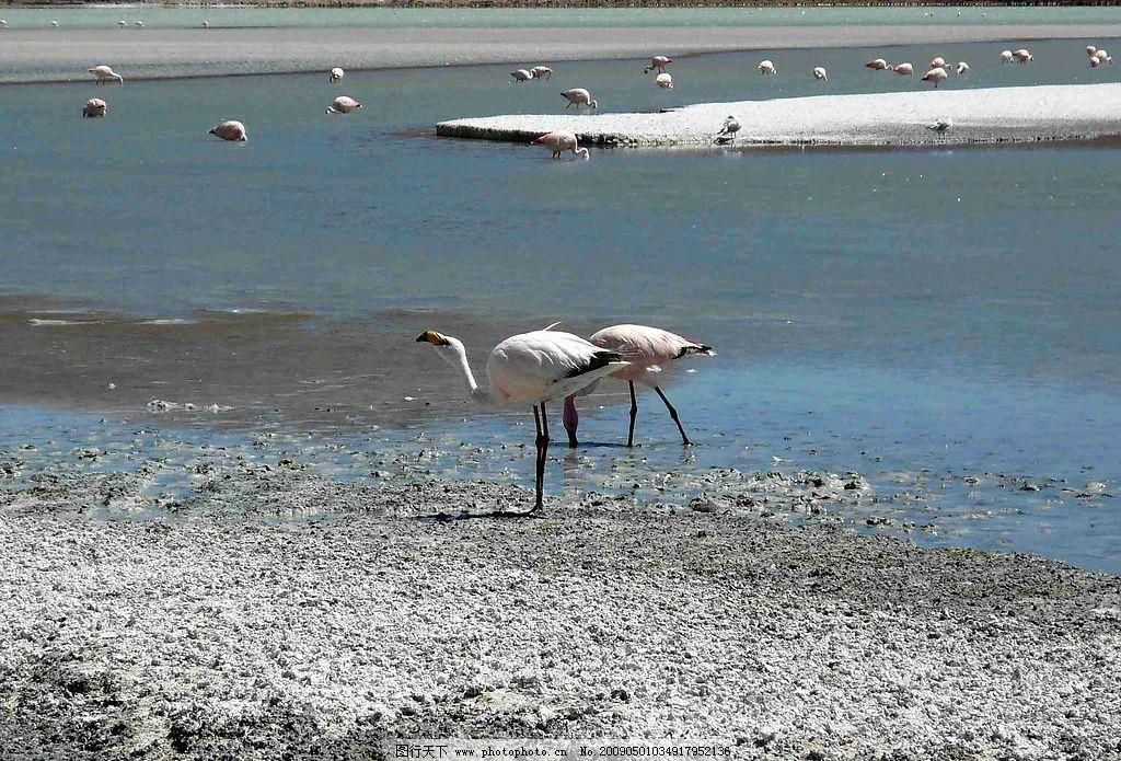 湖泽之地 大自然 景观 湖泊 池畔 沼泽 景象 沙砾 动物 鸟类