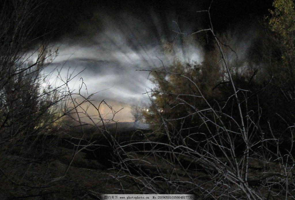 胡杨 内蒙古 额济纳 旅游摄影 沙漠 戈壁 红柳 柽柳 胡杨树