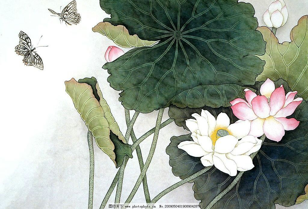 国画荷花蝴蝶 红荷花 白荷花 蝴蝶 文化艺术 绘画书法 设计图库 720