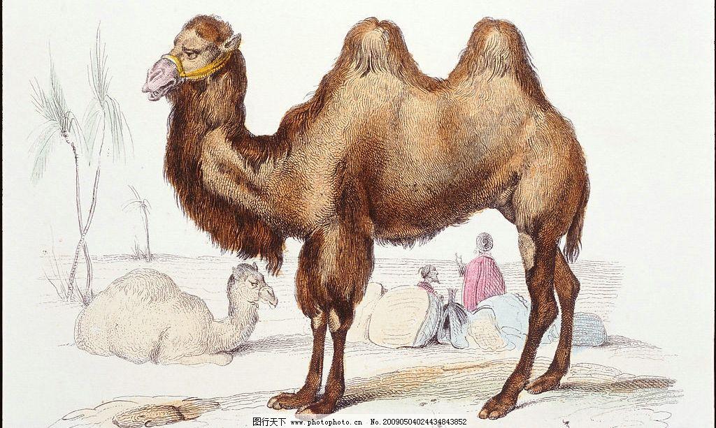骆驼fs40-7f电路板